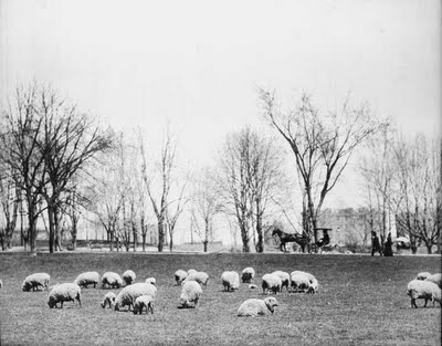Sheep_Meadow-Central_Park-NYC